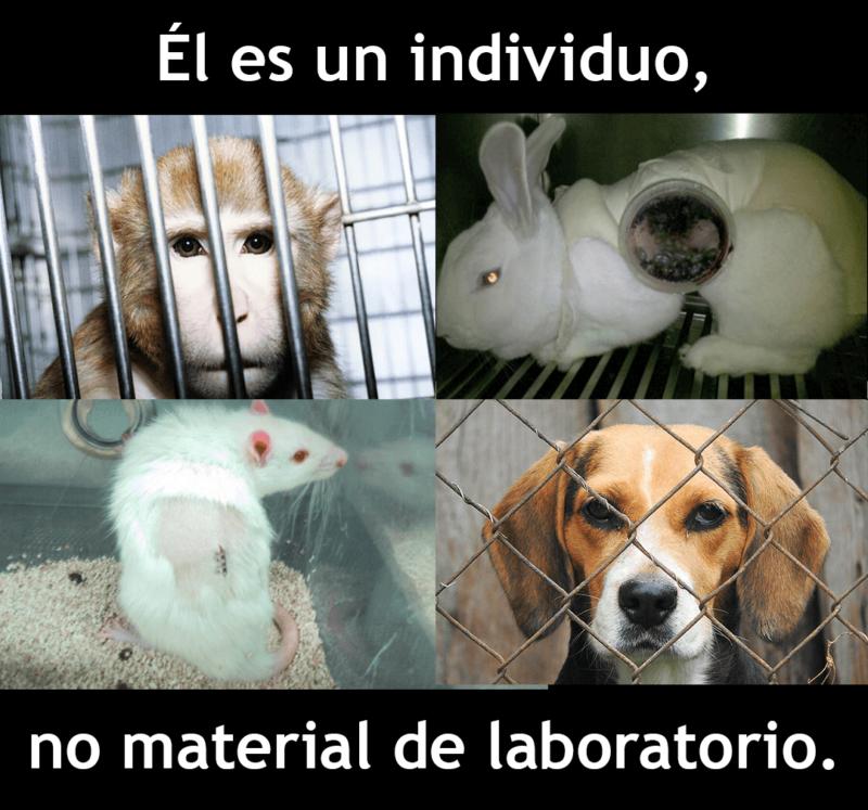 El es un individuo, no material en un laboratorio