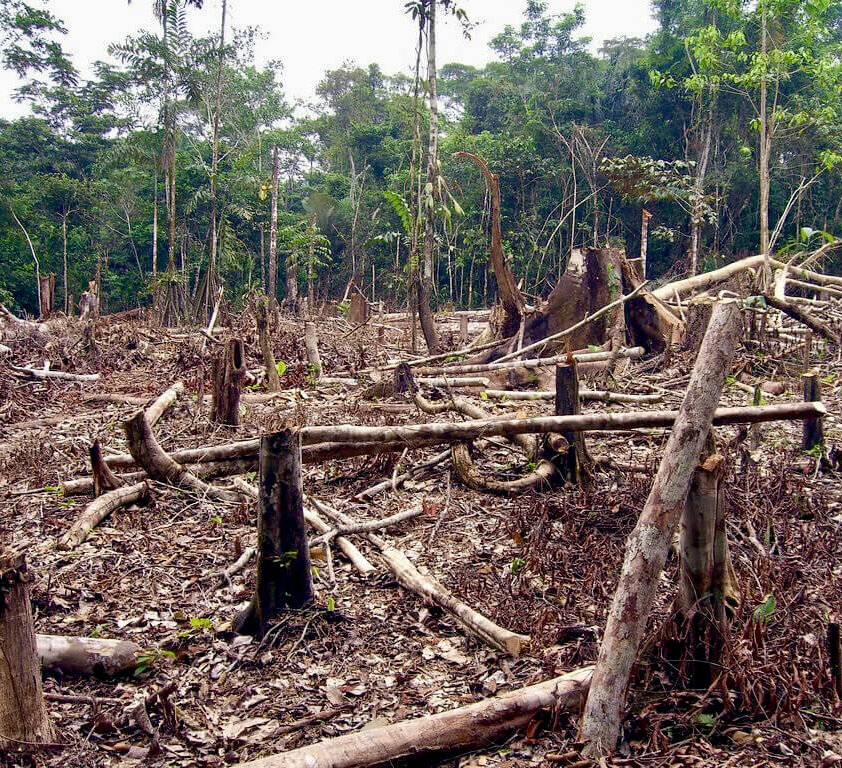 Slash and burn agriculture in the Amazon.
